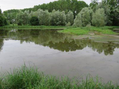Entretenu, l'étang des Frettes serait un lieu de pêche agréable.